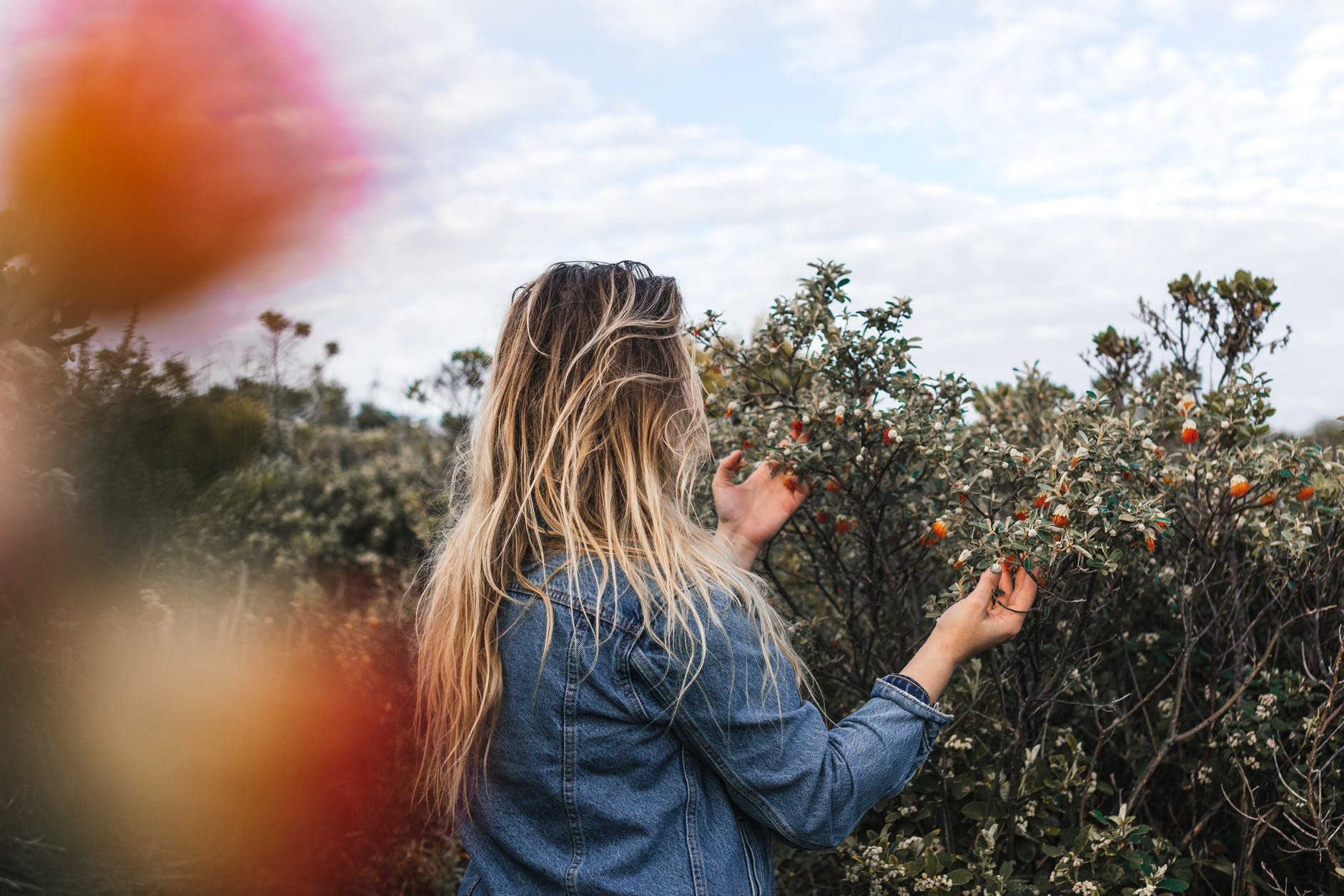 anonymous woman touching fruits on shrubs in countryside